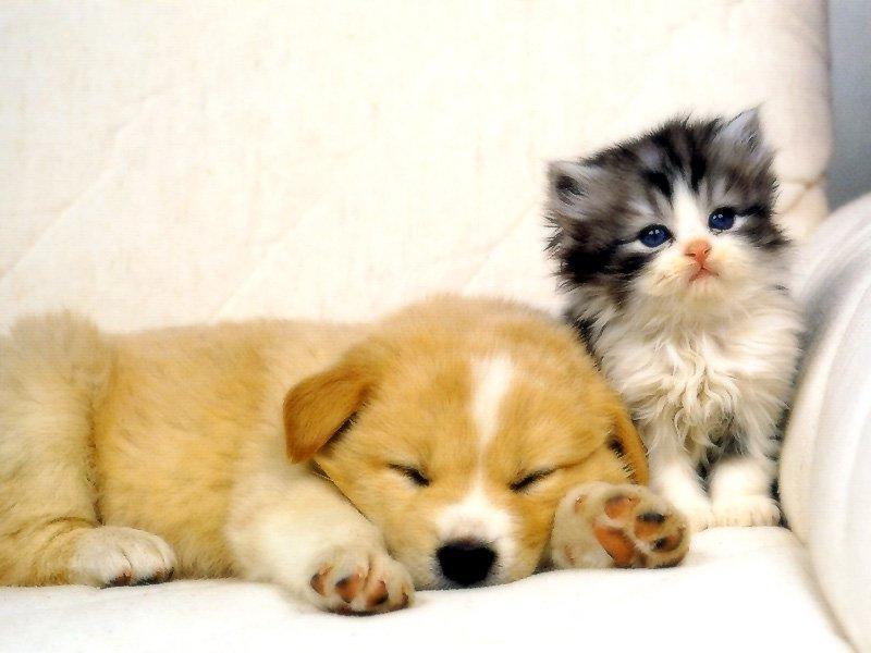cute puppies and kittens wallpaper. Cute puppies cute kittens