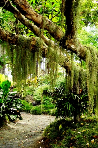 Facebook Spanish Moss Iphone Wallpaper Pictures Spanish