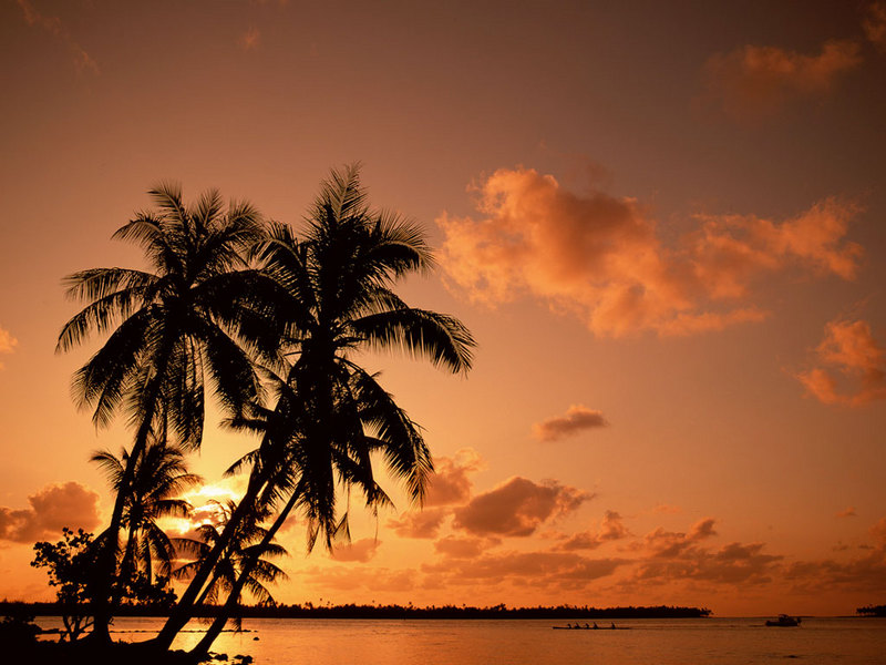 palm trees wallpapers. Palm Tree. Rated 3.89/5 by 20 people