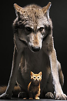 Wolf and Cat iPhone Wallpaper